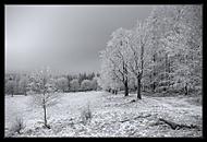 Cesta do pohádkovýho lesa.. (Bohumil Kozák)