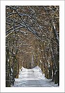 Zimní  Alej kněžny Zaháňské... (Vlastimil Pibil)