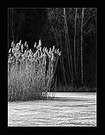 Tichá chvilka u rybníka 6... (Vlastimil Pibil)
