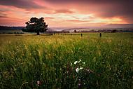 Pastviny po západu (xfiala43)