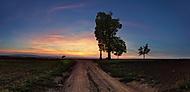 Cesta kolem starého stromu (xfiala43)