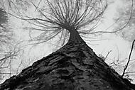Stromm (zidal)