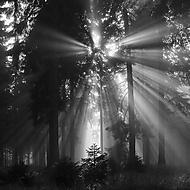 Osvícený les (Megas.Lakkos)