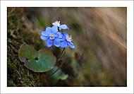 """Jarní """"zázraky"""" 3... (Vlastimil Pibil)"""