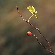 Podzimní (Megas.Lakkos)