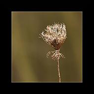 Nature (Megas.Lakkos)