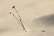 Zimní (Megas.Lakkos)