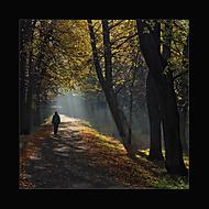 Podzimní ráno 2... (Vlastimil Pibil)