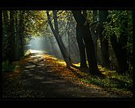Podzimní ráno... (Vlastimil Pibil)