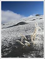 Zimní 3... (Vlastimil Pibil)