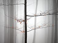 Mlhavá samota (MarekUjcik)