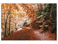 Podzimni les (BenaCZ)