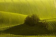 Moravsk� jaro (MarekUjcik)