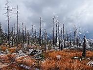 Jizerské hory v říjnu (Dančík)