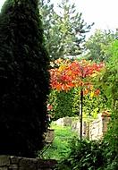 PPP - prvn� pozdrav podzimu (oldjerry)