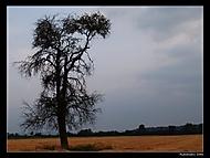 Po búrke (Radovan_sk)