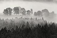 Podzimn� mlhav� r�no (MarekUjcik)