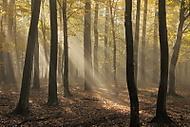 Podzimn� slunce (MarekUjcik)