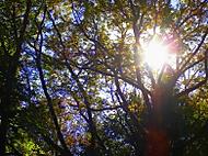 Slnko  v listí (fdoko)