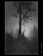 Svítání v mlze (honzj)