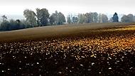 Vzpomínka na podzim (honzj)