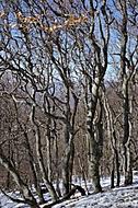 Poslední sníh na Milešovce (jkrtek)