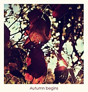 Autumn begins (TerkaT)