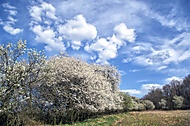 Jaro v bílé (jkrtek)