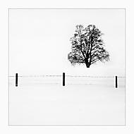 Jednou jsem se zeptal stromu,  proč na zimu nejde domů... (No21)