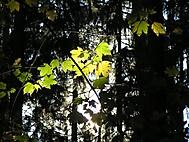 Podzim (Dušis)