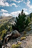 V pohoří Olympu (Vlastimil Pibil)