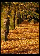 Stromořadí (-noc-)
