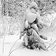 zimní model 2018 (rol_men)