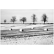 Zimní mimikry... (No21)