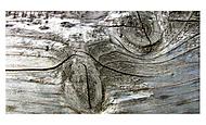 dřevo (Challis)