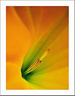 Uvnitř květu... (Vlastimil Pibil)