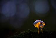 Z kouzelného lesa (MarekUjcik)