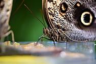 motýlí piknik (yrcca)