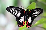 Motýl 5 (Kuběna Miroslav)
