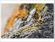 Mravenčí pachtění 3... (Vlastimil Pibil)