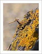 Mravenčí pachtění 2... (Vlastimil Pibil)