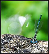 kukadla (M.Bruna)