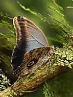Z výstavy motýlů - III. (Jana Pokorná)