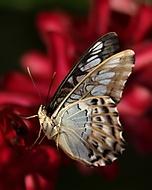Z výstavy motýlů - II. (Jana Pokorná)