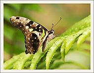 Z výstavy motýlů - I. (Jana Pokorná)
