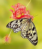 Z výstavy motýlů - V. (Jana Pokorná)