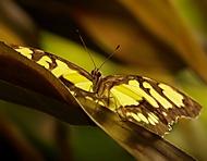 Z výstavy motýlů IV. (Jana Pokorná)