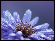 Modrá je mokrá (dogina)