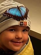 Z výstavy motýlů - VI. (Jana Pokorná)