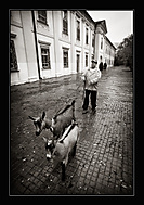 Jura a jeho zámecké kozy (Zdeněk Dvořák)